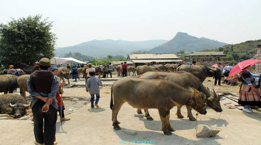 bac ha market -sapa tour with viet flame tours