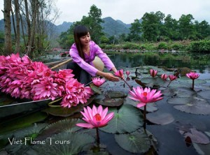 vietnam-lotus-flower(450)